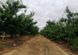 La agropecuaria municipal AMGSA alcanza cifras de venta históricas