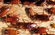 Actuaciones para la Erradicación de Plagas